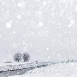 Sneeuw bokeh!