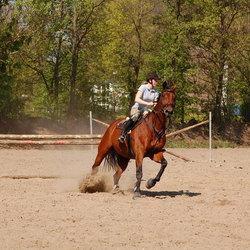 Werken met je Paard.
