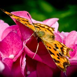 Nature Art 2011 - 20