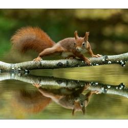 The Golden Squirrel Bridge
