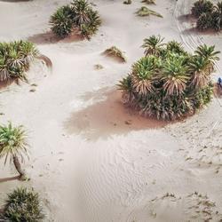 Peter Erren door de palmbomen