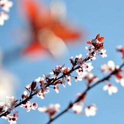 Even terugdenken aan de lente...
