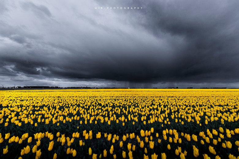 Contrast - Dark & Yellow