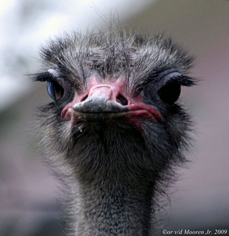 Hallo,schat hoe vind je me Oog wimpers !!!! - *