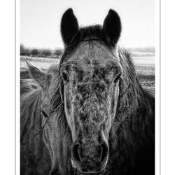 Winter Horses!!