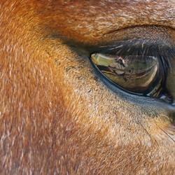 paardenoogspiegeling