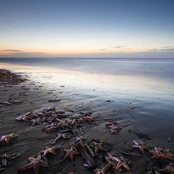 Zeesterren in Zandvoort