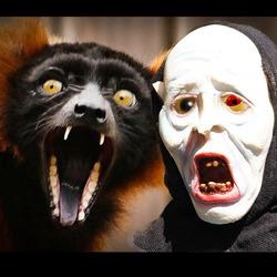 Bewerking: halloween 2.... wezenloos schrok ie zich........