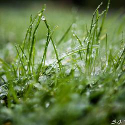 Bevroren gras in de vroege ochtend