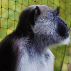 Apen kijken