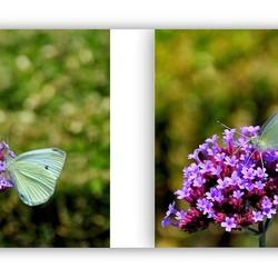Nu de vlinders er nog zijn...