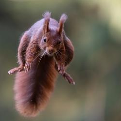 Squirrel powerrrrrr!