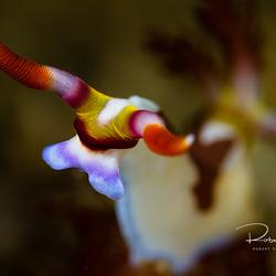 Onderwaterkoe
