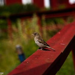 Vogel op een reling