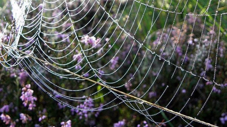 Web - Web met dauwdruppels.
