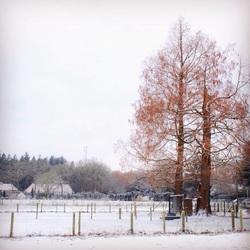 Kleur in de sneeuw