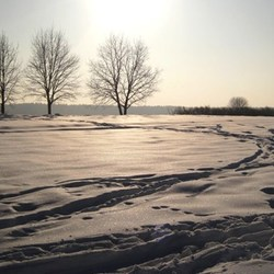 Snow landscape edited