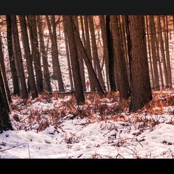 Alleen in het bos - Rozendaal