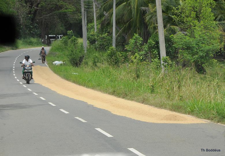 pas op rijst op de weg 1903038358mw - Het asfalt wordt warm door de zon .Zodoende kan men de rijstoogst hierop drogen