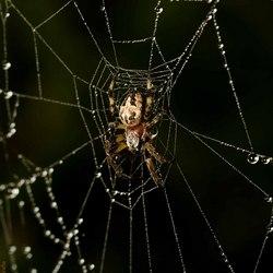 Condensed web