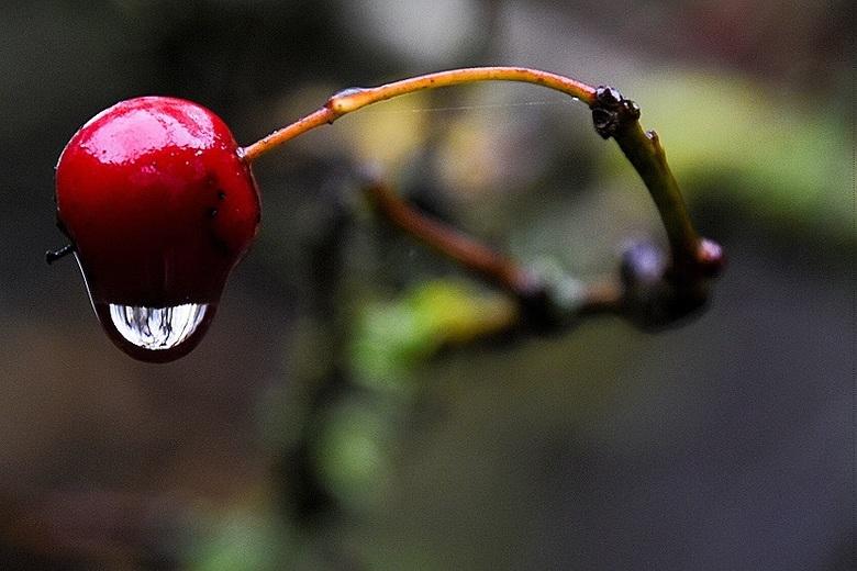 Rainy day... -