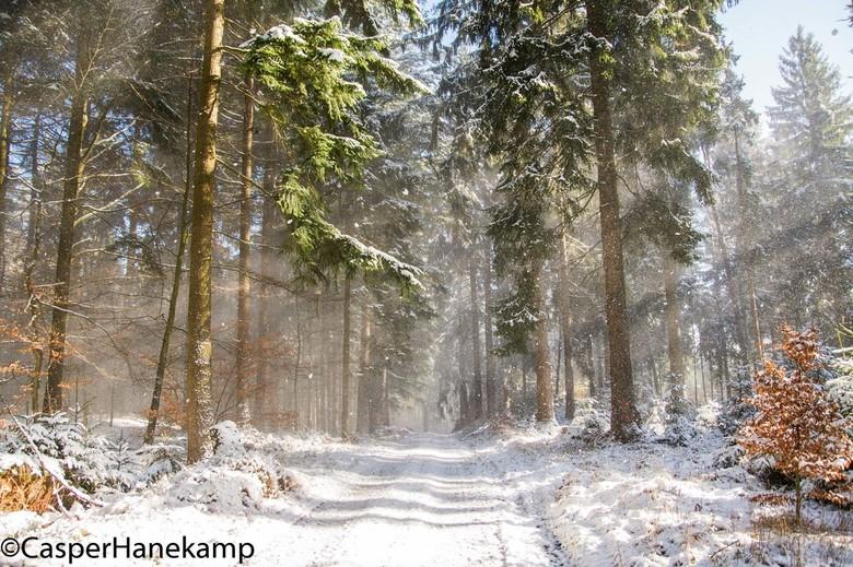 Wind Door De Bomen Natuur Foto Van Casperhanekamp Zoom Nl