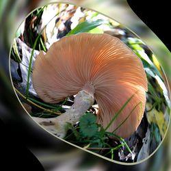 Een swingende paddenstoel
