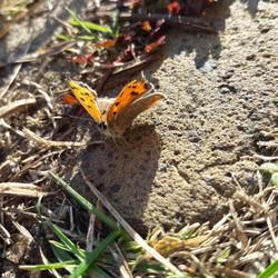 Baby vlinder