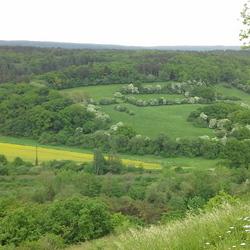 Landschap Viroinval Ardennen