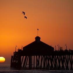 Pelikanen op jacht bij zonsondergang
