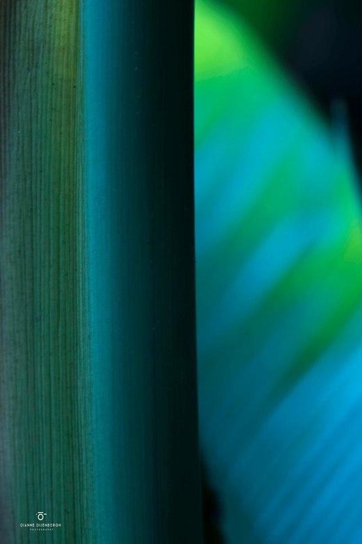 """Strong.. - Hoe krachtig vormen en kleuren zijn in de natuur zie je op veel """"kijkfrequenties"""". Soms in een landschap maar ook van heel dichtb"""
