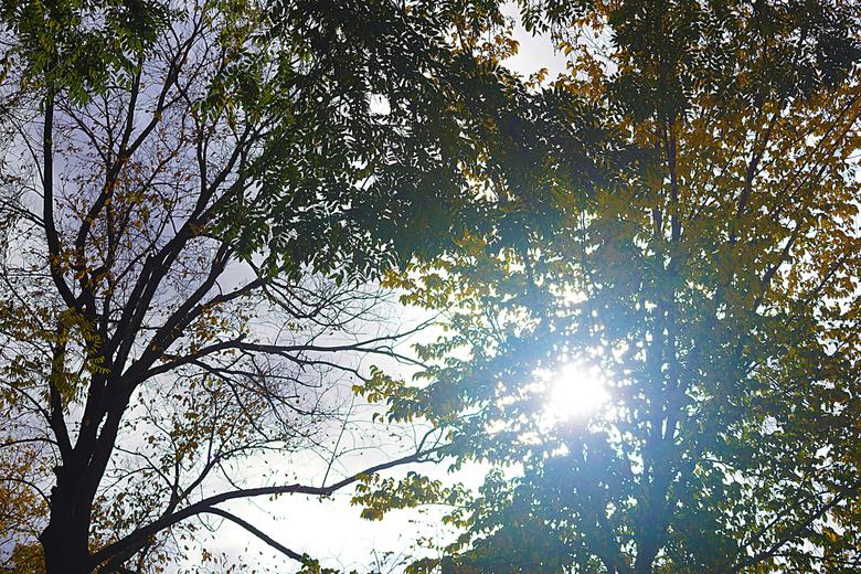 Zie de zon schijnt door de bomen. -