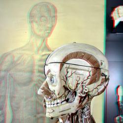 Rijksmuseum Boerhaave Leiden 3D