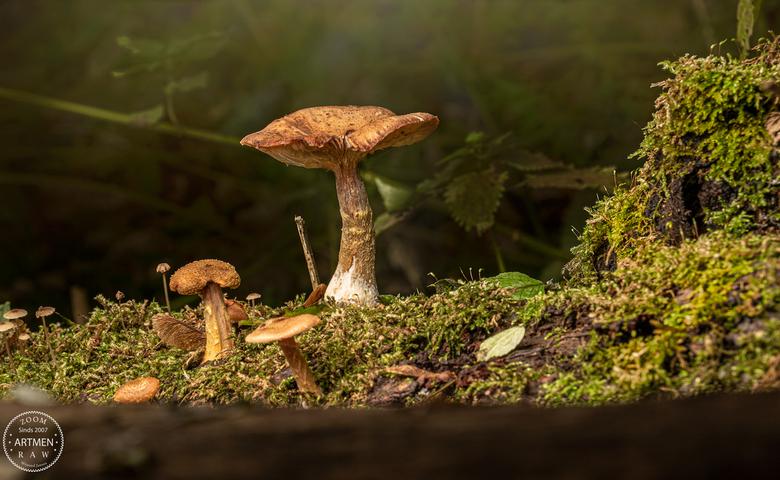 Mushroom is still in its element - Hoe lang nog?