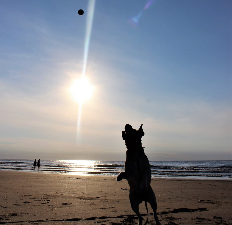 Happiness! - Geluk op het strand van Domburg - Augustus 2018!