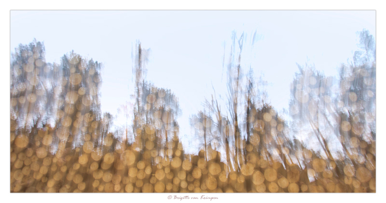 Moving Forest I