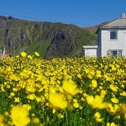 Voorjaar in het noorden van Noorwegen