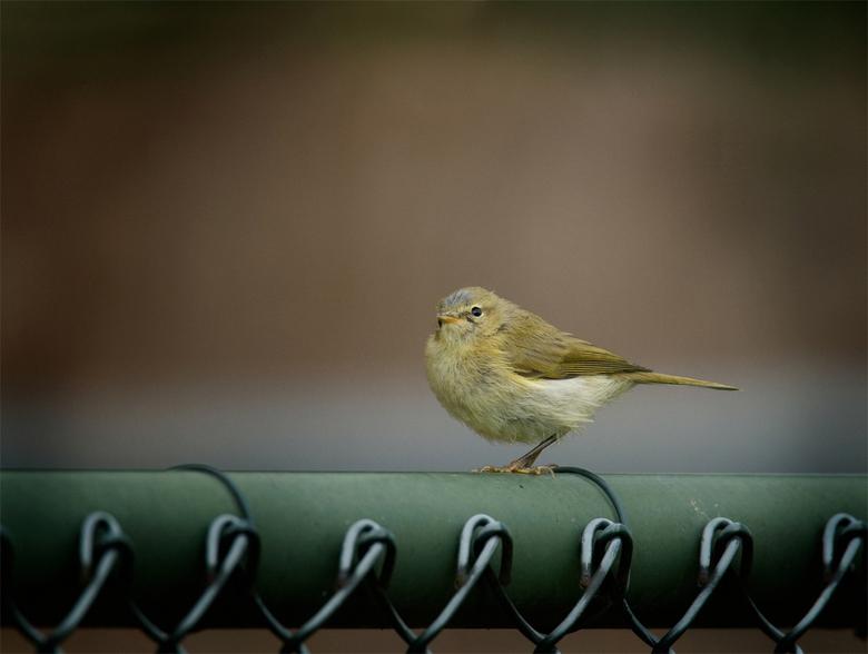 Little birdie - @@ de mooie kleine dingen op onze aarde @@