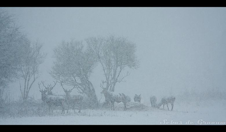 Sneeuwstorm - - dit is een kleuren foto;geen zwart/wit -<br /> <br /> De dag begon redelijk. Het was grijs, maar de verwachting was dat er zon kon k