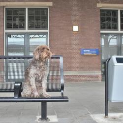 de wachtende hond