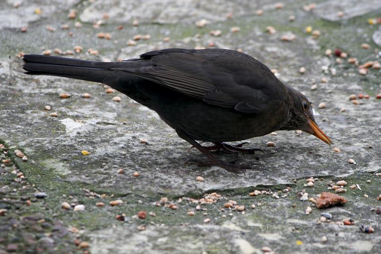 ff kijke - druk in de tuin met the birds  <br />