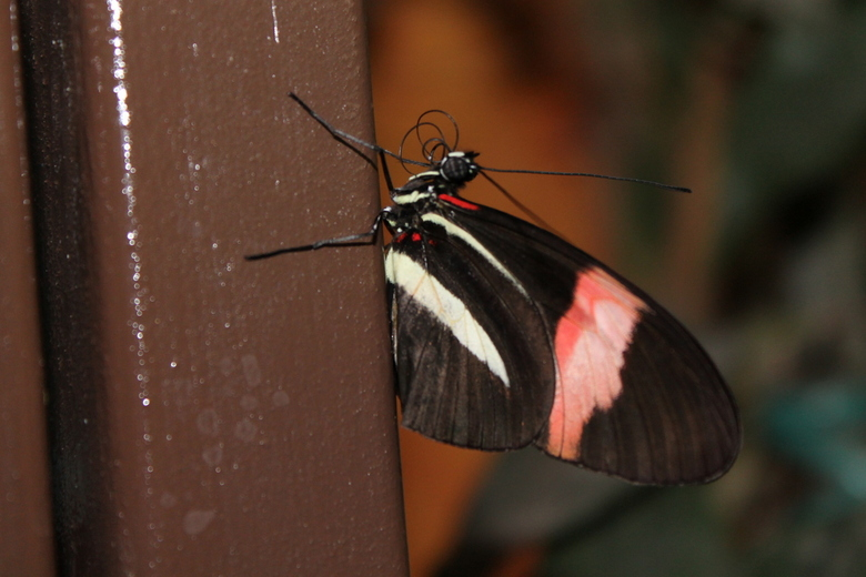 Vlinder - Tropical Zoo