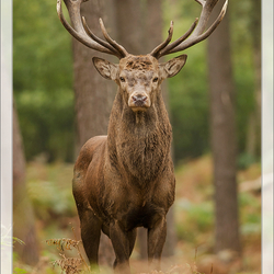 Lord of the forest!!!