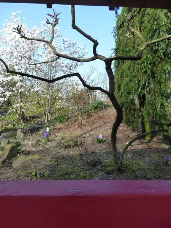 japanse tuin - monde verde