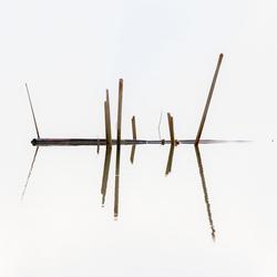 Spiegeling in de Biesbosch