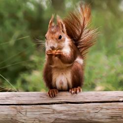 In het natuurgebied La Mata in Spanje. De eenkhoorne is lekker aan het peuzelen.