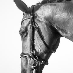 Equine Portret 2