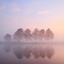 Boompjes in de mist