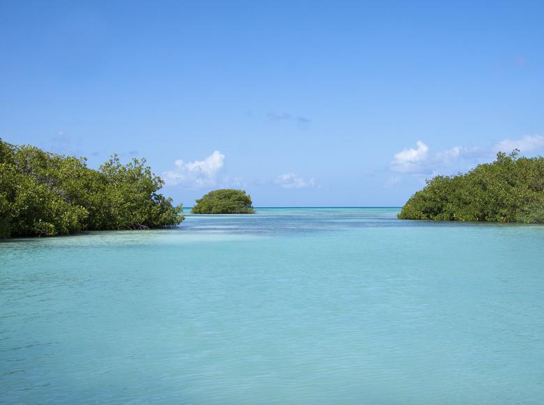 Mangrove dominican republic - Mangrove dominicaanse republiek<br /> <br />