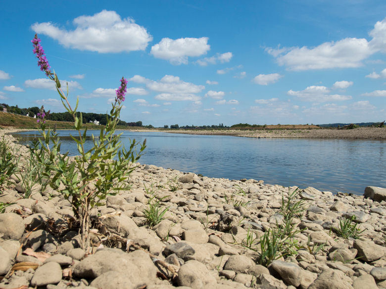 Laag water Maas - laag water grensMaas